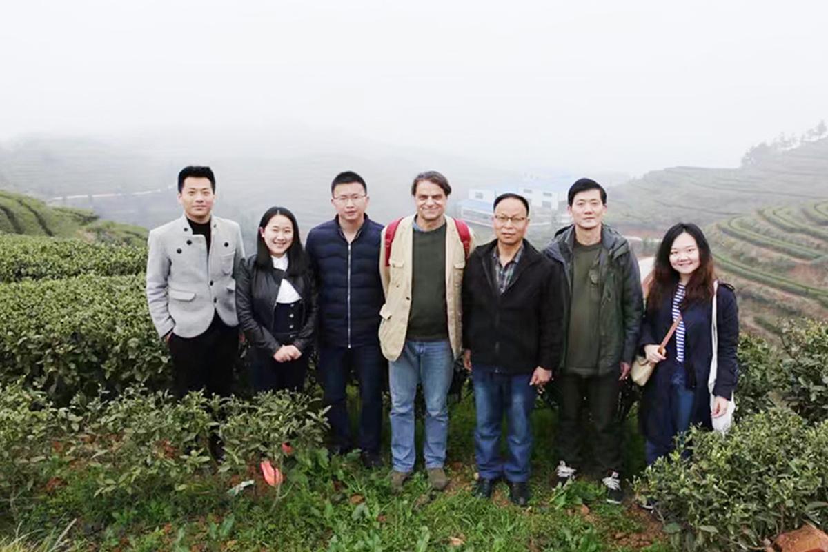 外國客戶參觀會同茶園