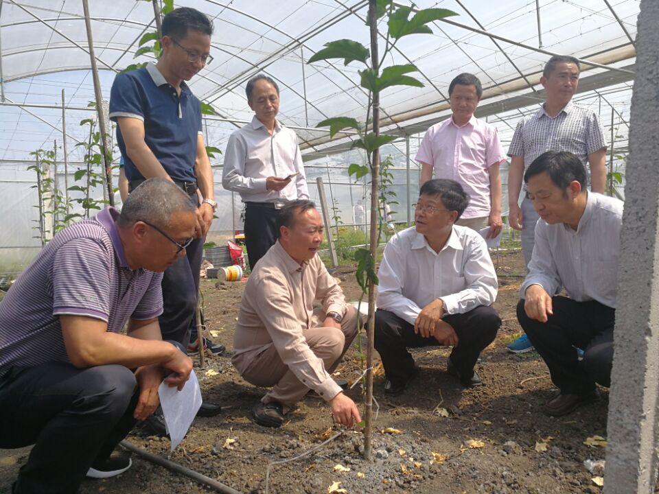 州政协主席陈国芳同志一行赴安龙县调研精品果业发展