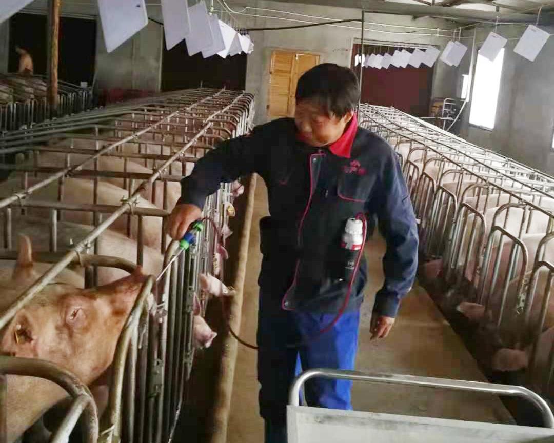 我怀念的最美光景——记新五丰母猪事业部益阳万能母猪场易凯昌